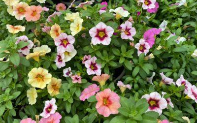 Beratung im Blumenmeer